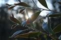 Raindrops jewels on leaves