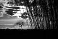 Willow tree under dark clouds