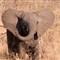 Elephant01_sm