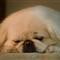 Sleepy Doggy