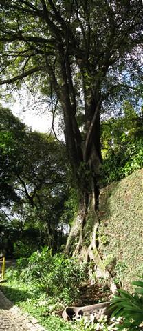 Rio Tree2 OK