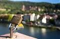 Letter B - Heidelberg Alte Brucke Love Lock
