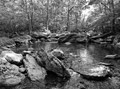 Black and white photo of Friend's Creek in northern Maryland during June.  This is a popular trout stream.  The crowds have disappeared now that spring stocking is finished.  One can appreciate just the beauty of the landscape whether or not a limit of trout is caught.