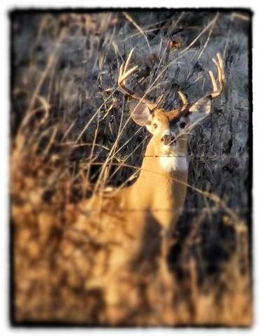 bobby's deer_Snapseed
