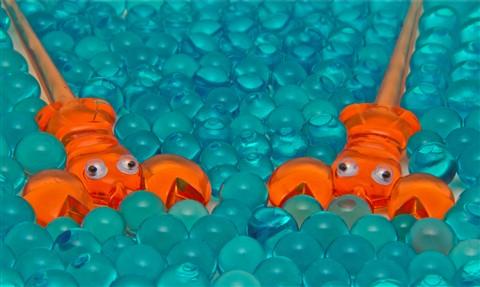 Swimming Lobster Picks