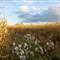 milkweed in maze 02