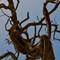 Tortuous tree