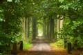 helee woods