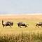 04_Ngorongoro (388 van 522)