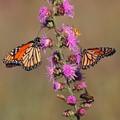 The Pollinating Crew