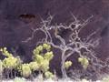Tree at Uluru