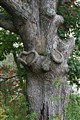 Even trees can have a heart ...