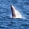 1-Whale breach 9x16
