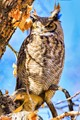 Great horned owl resting on a tree in Autumn colors.