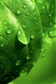 Green droplet