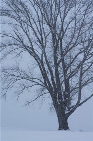 Tree of Philosophy in Snow
