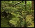 Yoda Greenscape