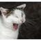 Wilbur yawns...