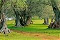 Enchanted Trails