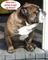Bulldog Ponders New Target