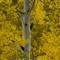Dunkley Pass Detail crop