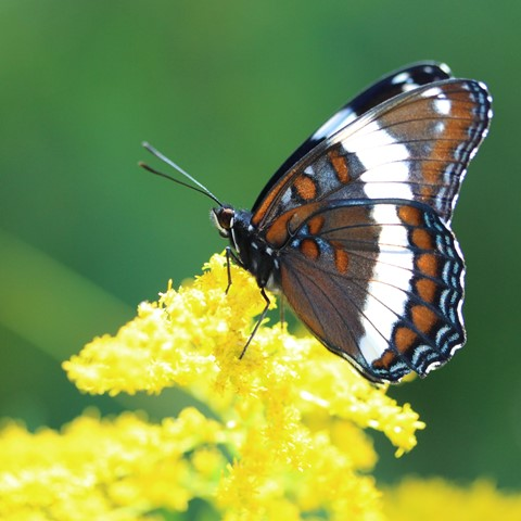 butterfly in the Bruce County 2