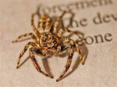 Arachnid On My Newspaper