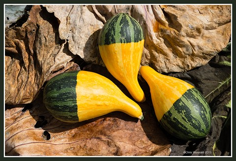 natform-cabbageleaves-gourds1