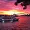 Spectacular Sunset over Sydney Harbour