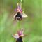 wild orchids  P5121072-rid