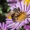 Bee-4265