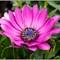daisy-1: OLYMPUS DIGITAL CAMERA