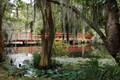 Taken at Magnolia Plantation in Charleston, SC.