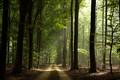 Heverlee woods, Belgium