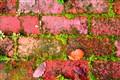 Bricks & moss