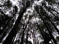 Bosque Patagonico
