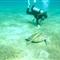 Nature & Underwater