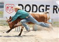Chute Doggin' at the Junior Rodeo