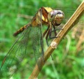 3_Dragonfly_007_S