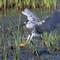 2018-06-19 GSL Wetlands 6220