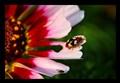 Flower Show 1 (8)
