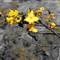 _DSC0659 Kapok bloom crop