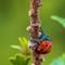20200611 Orange beetle vert  PLRG1013