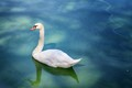 Lake Pamvotida, Ioannina, Greece
