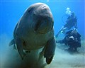 Hi there, you may cal me Dugong