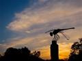 Dragonfly at Dusk