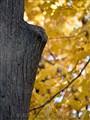 Whitnall Park 2012-100025