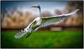 Egret Taking Flight