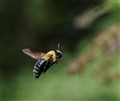 Bumble Copter