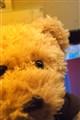 Hershey's bear~